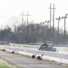 texas_outlaw_fuel_altereds_thunder_valley_raceway77