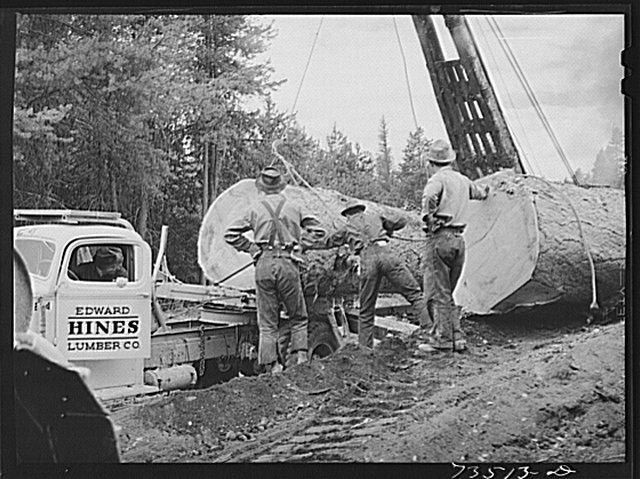Huge logs on truck