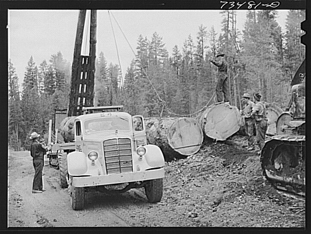 logs being loaded on truck