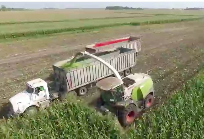 The 600hp Mower – Watch A CLAAS Jaguar 960 Chew Up A Cornfield Like Your Snapper Eats Grass