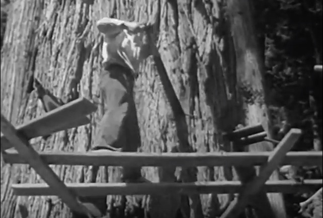 Logging Redwoods: This 1946 Video Provides An Amazing Glimpse Into How The Giants Came Down