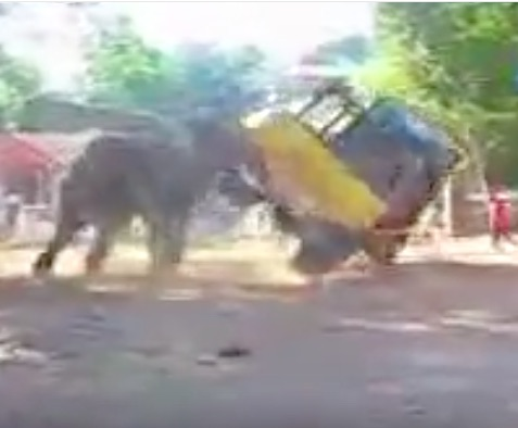 Watch This Elephant Turn A Pretty Big Truck Over After Playing With It Like A Toy